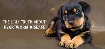 THE UGLY TRUTH ABOUT HEARTWORM DISEASE