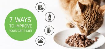 7 Ways to Improve Your Cat's Diet