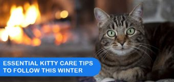 Essential Kitty Care Tips To Follow This Winter