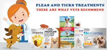 Flea and Tick Treatments – These Are What Vets Recommend