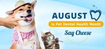 August is Pet Dental Health Month: Say Cheese!!
