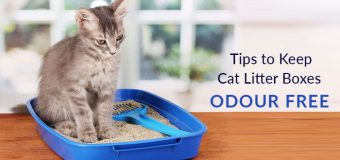 Tips to Keep Cat Litter Boxes Odour-Free