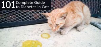 Complete Guide to Diabetes in Cats