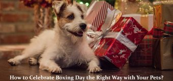 How to Celebrate Boxing Day the Right Way with Your Pets?