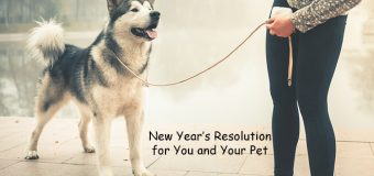 New Year's Resolution for You and Your Pet