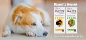 Bravecto Review – An Ultimate Protection from Fleas and Ticks