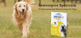 Interceptor Spectrum: Vet Recommended Heartwormer for Dogs