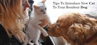 Top 6 Simple Tips To Introduce a New Cat To Your Resident Dog