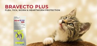 Bravecto Plus – Flea, Tick, Worm & Heartworm Protection