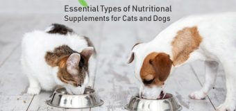 Essential Types of Nutritional Supplements for Cats and Dogs