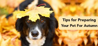 Tips for Preparing Your Pet For Autumn