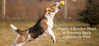 Highly Effective Ways to Prevent Back Injuries In Pets