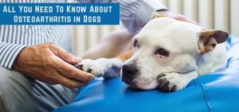 All You Need To Know About Osteoarthritis in Dogs
