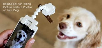 Helpful Tips for Taking Picture Perfect Photos of Your Dog