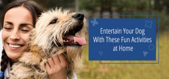 Entertain Your Dog With These Fun Activities at Home
