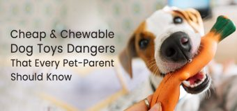 Cheap And Chewable Dog Toys Dangers That Every Pet-Parent Should Know