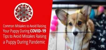Common Mistakes to Avoid Raising Your Puppy During COVID-19