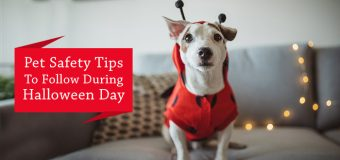 Pet Safety Tips To Follow During Halloween Day