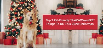 "Top 3 Pet-Friendly ""PaWWWsomEEE"" Things To Do This 2020 Christmas"