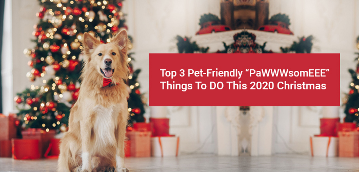 Pawsome thing to do on this chritmas