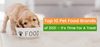 Top 10 Pet Food Brands of 2021 –It's Time For A Treat