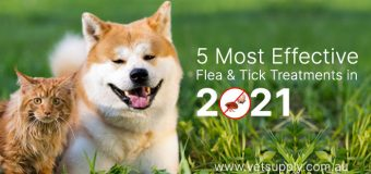 5 Most Effective Flea and Tick Treatments in 2021