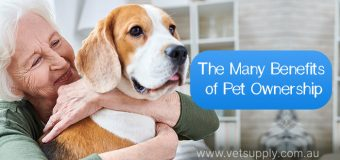 Many Benefits of Pet Ownership