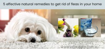 5 effective natural remedies to get rid of fleas in your home