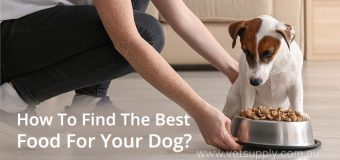 How To Find The Best Food For Your Dog?