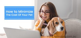 How to Minimize The Cost Of Your Pet