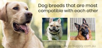 Dog breeds that are most compatible with each other