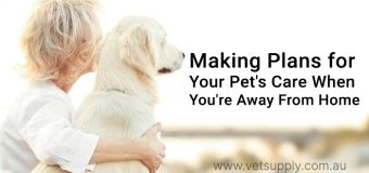 How to take care of your pet when you work full time