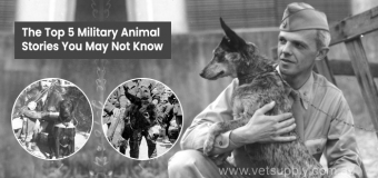 The Top 5 Military Animal Stories You May Not Know