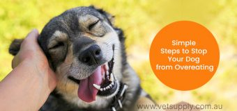 Simple Steps to Stop Your Dog from Overeating