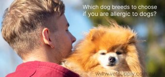 Which dog breeds to choose if you are allergic to dogs?