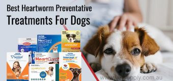Best Heartworm Preventative Treatments For Dogs
