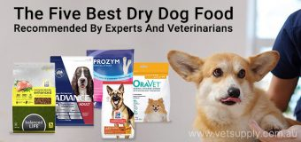 The Five Best Dry Dog Food: Recommended By Experts And Veterinarians