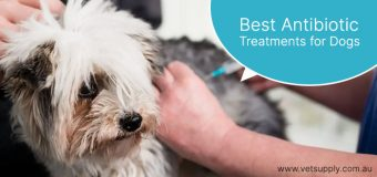 Best Antibiotic Treatments for Dogs