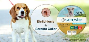 Ehrlichiosis And Seresto Collar