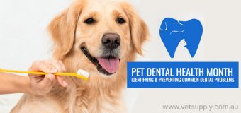 Pet Dental Health Month – Identifying and Preventing Common Dental Problems