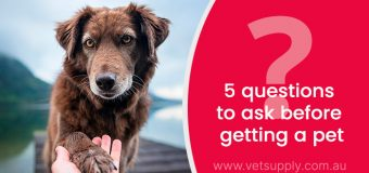 5 questions to ask before getting a pet