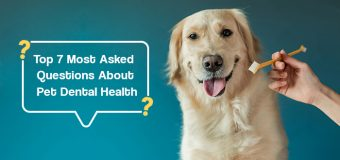 The Top 7 Most Asked Questions About Pet Dental Health