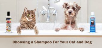Choosing a Shampoo For Your Cat and Dog