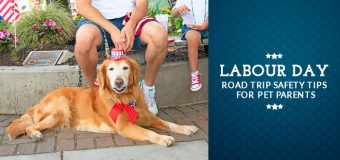 Labour Day: Road Trip Safety tips for Pet Parents