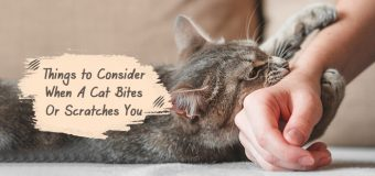 Things to Consider When A Cat Bites Or Scratches You
