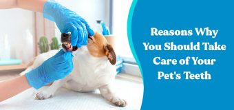 Reasons Why You Should Take Care of Your Pet's Teeth