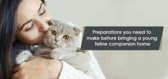 Preparations you need to make before bringing a young feline companion home
